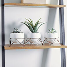 Potsy Desktop Planter Trio